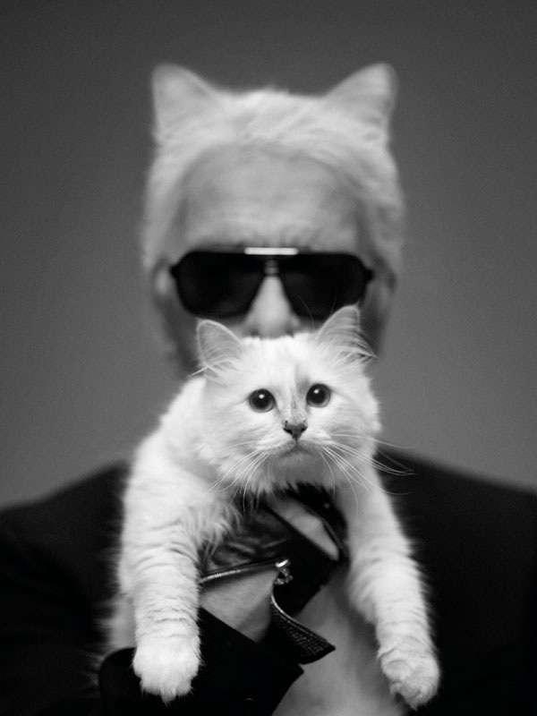 有名人の飼っているペット画像
