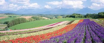 外国人旅行客に教えたい、おすすめできる日本にあるもの。