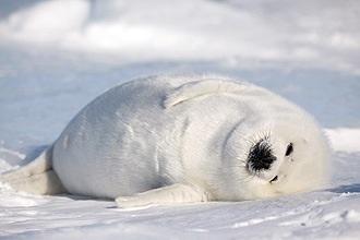 動物達の寝顔の画像ください-i-17-0
