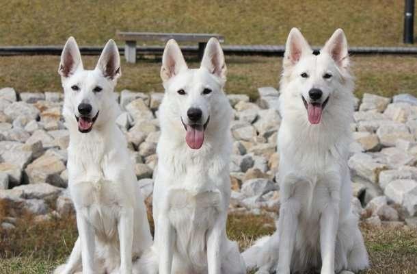 犬を飼うなら犬種は何がいいかについて。