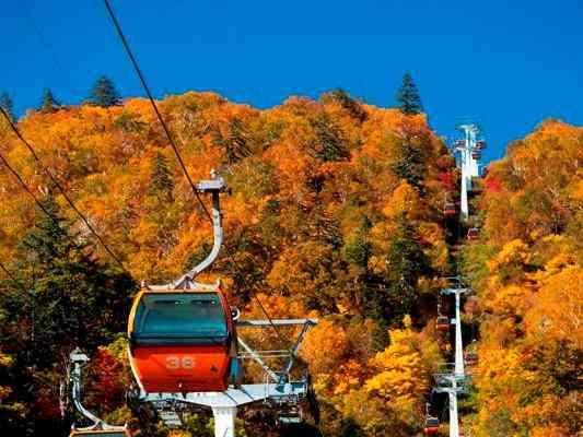 今年の紅葉、どこに行きますか?