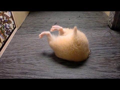 可愛いお尻(動物の後ろ姿の画像)