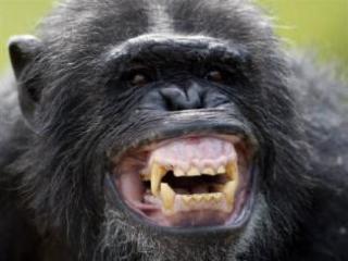 ふてぶてしい動物の画像