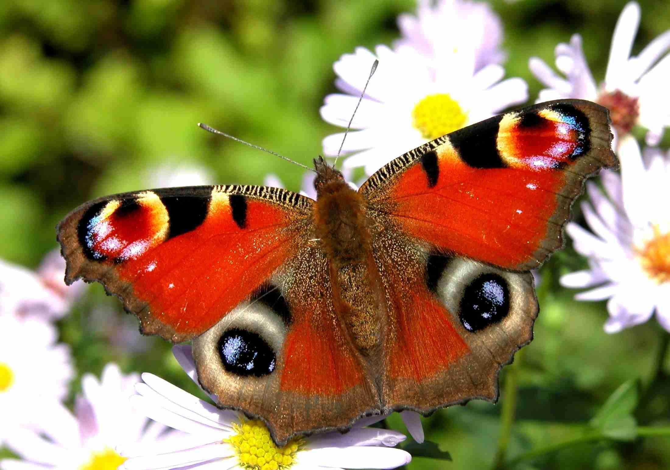演奏中に蝶が舞い降りる奇跡、顔にとまるもフルート奏者は動じず。