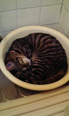 なぜ猫は人間の入浴シーンをのぞくのか