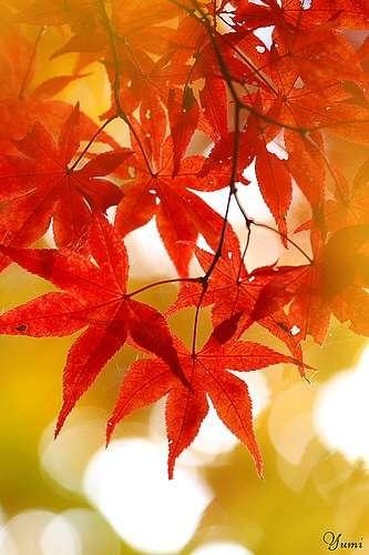 秋のデート