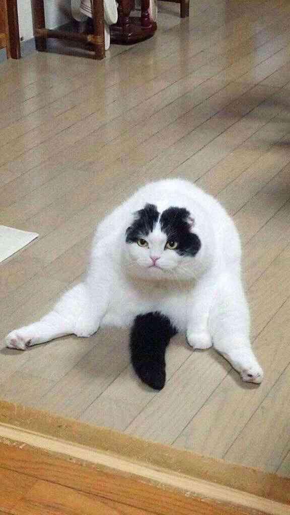 猫背さん集まれ〜!