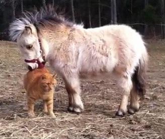 今飼いたいペットはありますか?