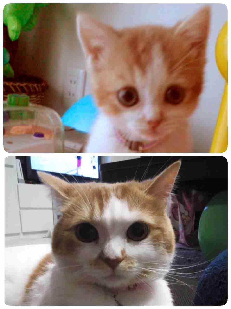 子猫から育てたことある方