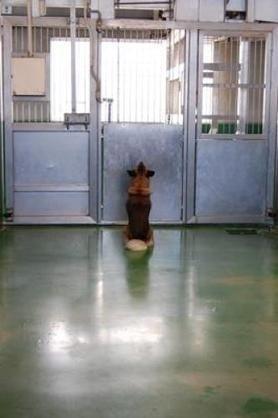引っ越し理由に高齢犬置き去り… 飼い主から謝罪文と持病薬 「捨て場でない」憤慨 東京ドイツ村で保護