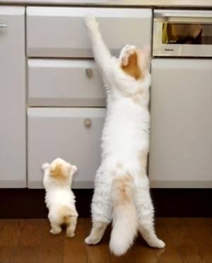 【画像】親のマネをする子猫が可愛い