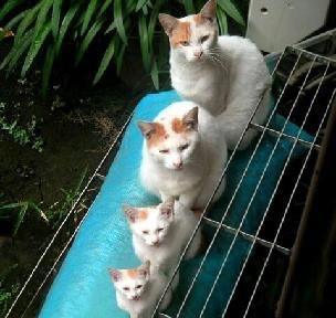 猫トイレの置き場所