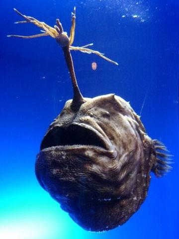 ガルちゃん水族館♪