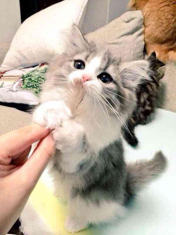 ペット(犬・猫)にオシャレをさせてますか?