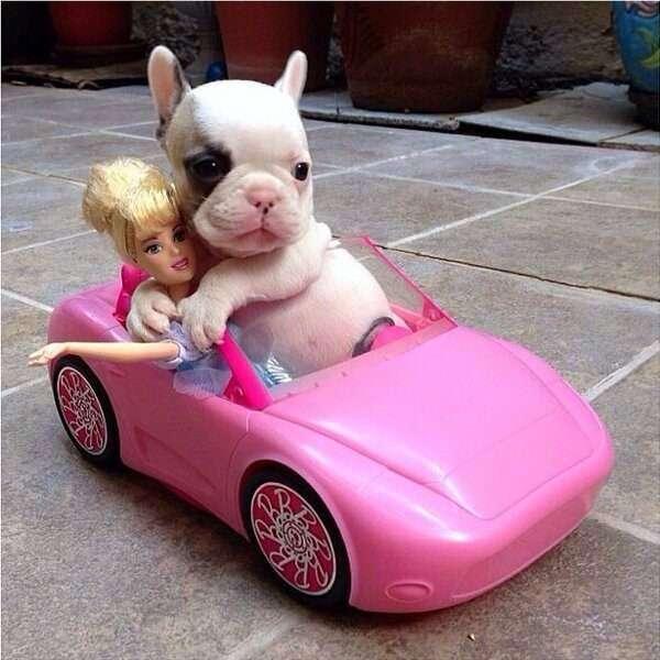 可愛い子犬の画像を貼るトピ