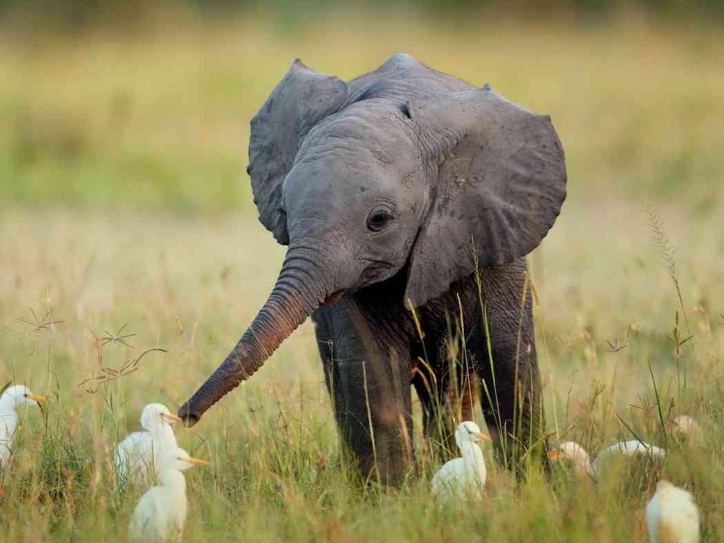 可愛い動物の赤ちゃんの画像を貼るトピ