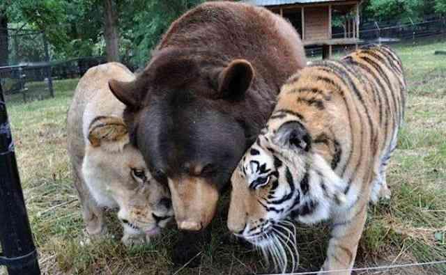 動物たちの変顔写真、ください!