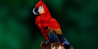 トリックアートや目の錯覚を利用した画像を貼るトピ