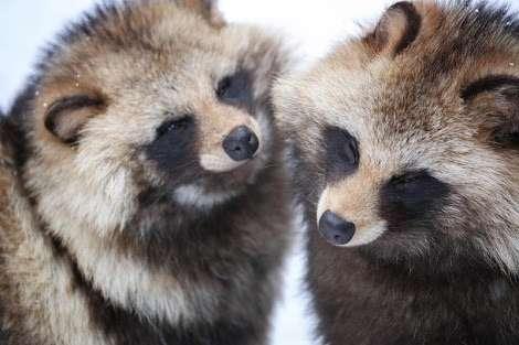 好きな野生動物の画像を貼っていくトピ