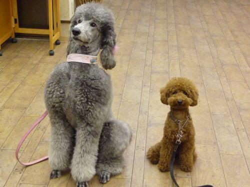 B'z稲葉浩志の創作を支える「2匹の愛犬たちとの有頂天タイム」