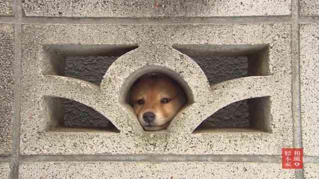 """マツコ・デラックス """"犬嫌い""""撤回「私、ちょっとおかしくなってきちゃって」"""