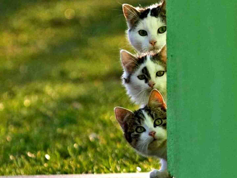 「ねこです」「ねこです」「ねこです」三匹合わせて「Perfumeです!」
