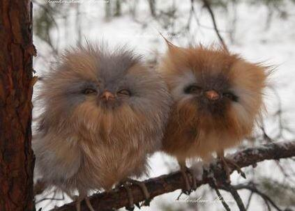 """""""癒やし鳥""""フクロウ 触れ合える場が続々開店「飼った気分になれる」"""