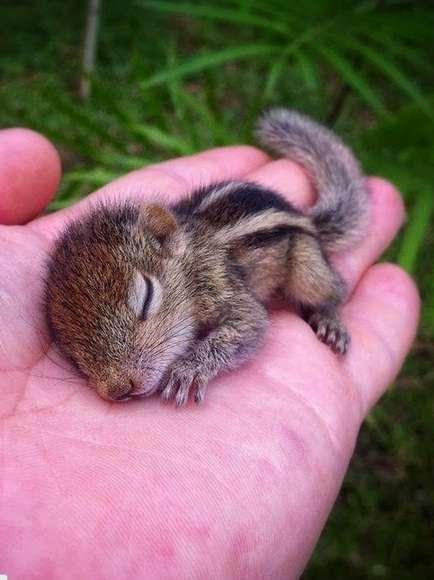 動物の寝てる画像ください!