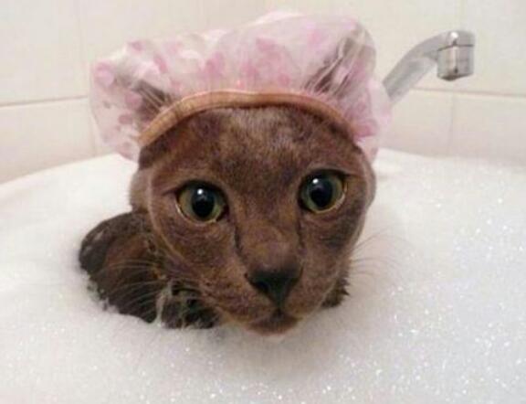猫のお風呂について