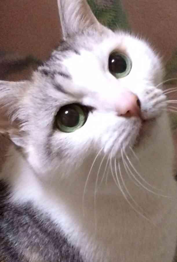 お宅のワンちゃん、ネコちゃん何歳ですか?