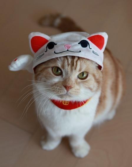 「猫かぶり(物理)」が想像以上にカワイイ