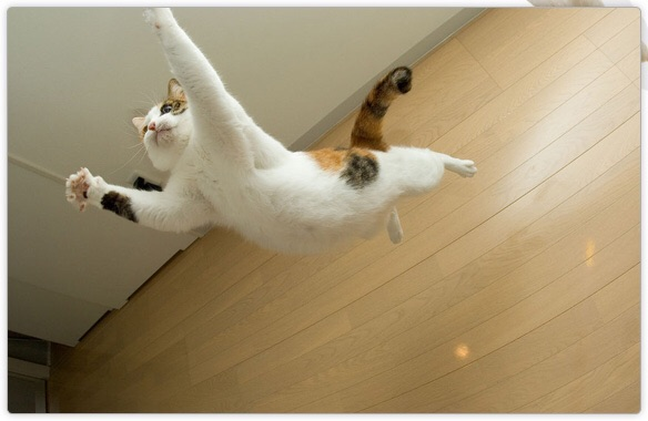 ネコちゃんの脱走防止対策を教えてください