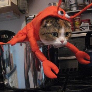 何をアピールしてるか分からない猫だとツイッターで話題に