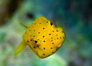 魚(金魚・熱帯魚・海水魚etc)飼ってる人