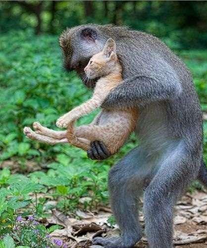 動物の人間みたいな瞬間!