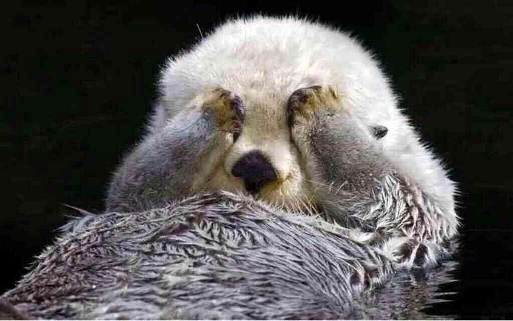動物達の面白い表情の画像貼りましょう