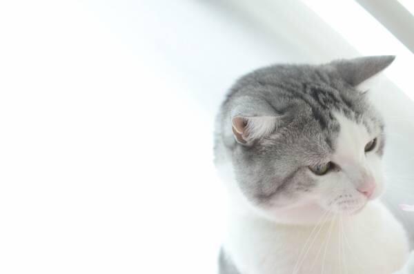 ネコに布団ドンをしてみた結果www