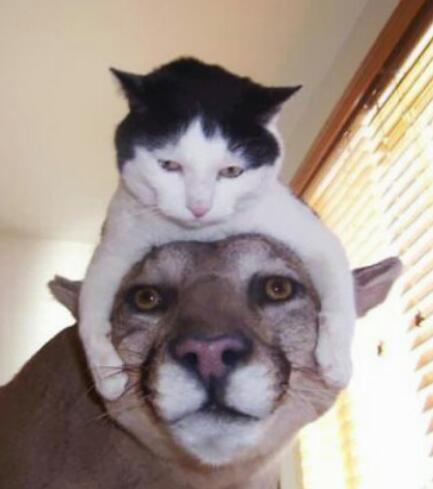 普段、猫かぶってる方