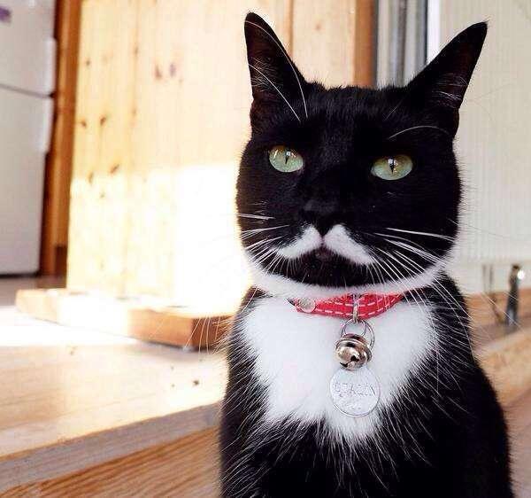 """【ネコの家】""""ひとりぼっち"""" になってもお守りします…… / 飼い主を亡くした高齢ネコ向け『老ネコホーム』が心強い!平均ネコ年齢は10~20才ニャ!!"""