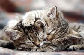 色んな「ごめん寝」画像で癒されるトピ