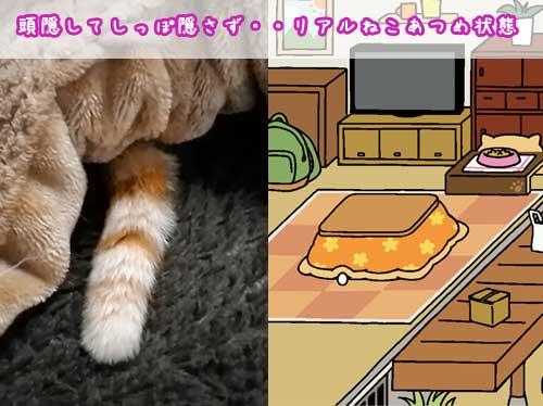 人気アプリ「ねこあつめ」を本物ネコで再現する「リアルねこあつめ」流行中