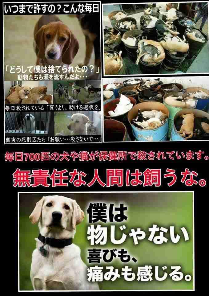広島県でふるさと納税を使い「犬の殺処分ゼロ」への支援→寄付額が通常の80倍以上にも膨らむ
