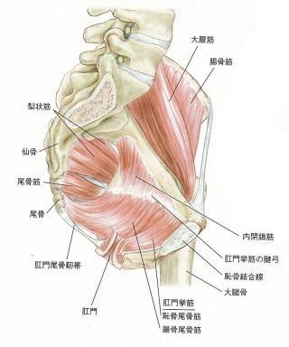骨盤底筋運動してる方~。