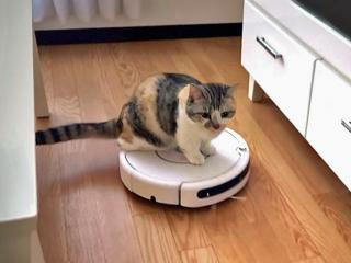 お掃除ロボットってどうですか?おすすめも教えてください。