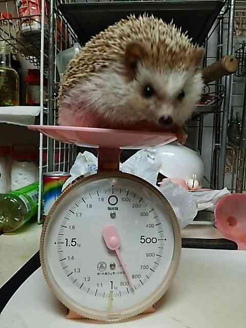 ペットの体重は何㎏ですか?