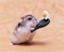 友達からネズミ講に誘われたら?