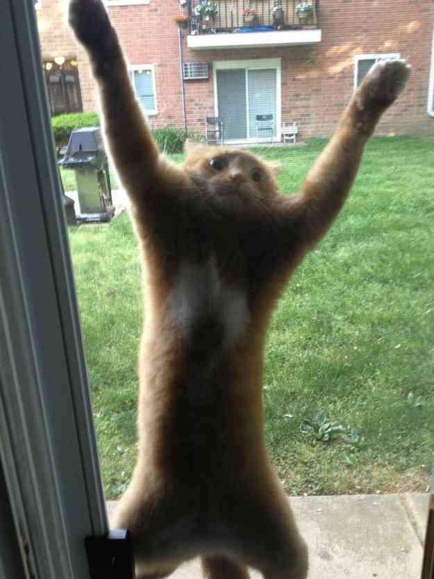 【画像】ネコが選択を間違えた瞬間www