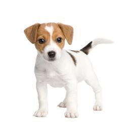 色々な犬種の画像トピ