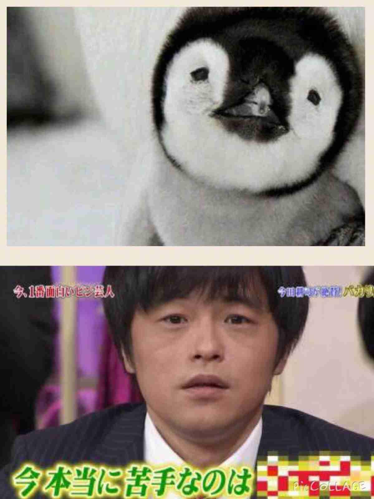 動物に似ている芸能人