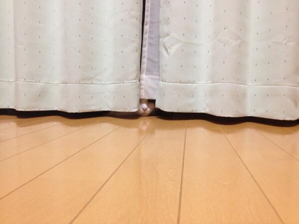 【画像】「飼い主を殺そうと企んでいそうな猫」ナンバーワン決定戦w